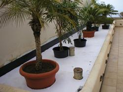 Jardinera La Matanza (2)