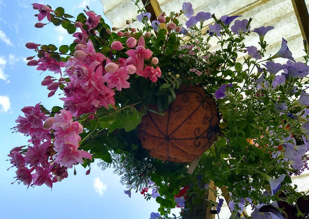 hanging basket .jpg