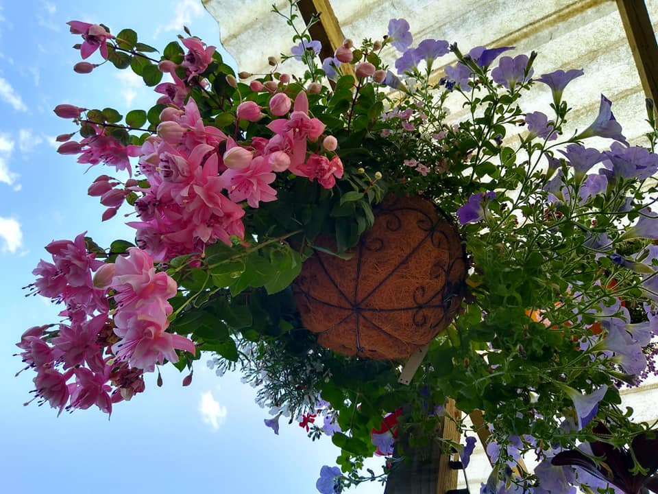hanging basket .jpg