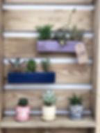 indoor plants 2.jpg