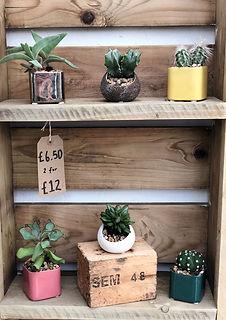 indoor plants 4.jpg