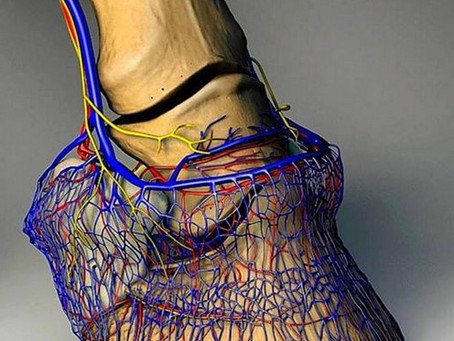 Unveiling the Hoof and Neck Connection