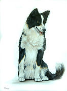 jet border collie 18x24.jpg