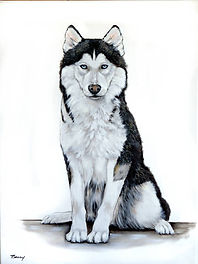 Pasha Siberian Husky 18x24.jpg