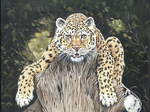 19 Resting Leopard 22x28