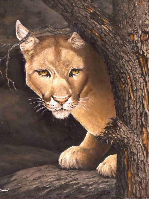 Puma Hiding