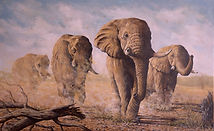 Looking for water 30x48.jpg