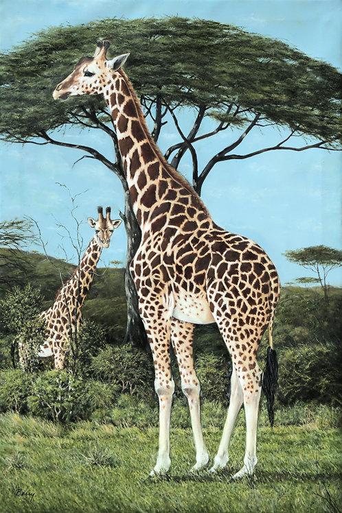 Serengeti Girafes