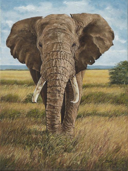 Lone Bull Elephant 24x18