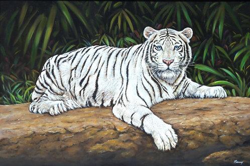 WHITE BENGAL TIGER 24X36