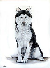 Pasha , Siberian Husky18x24-1.jpg