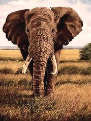 Lone Bull Elephant 24 x 18.jpg 2_edited.