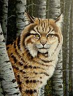 My Bobcat 14x18 -1.jpg