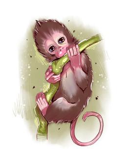 Adorable monkey