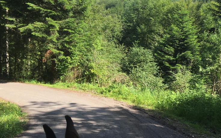 Balade sur les hauteurs des Vosges