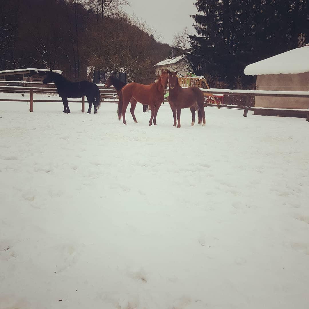chevaux à la neige