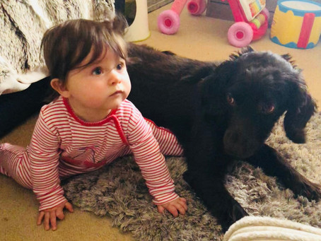 The Pros of having a Dog with Children