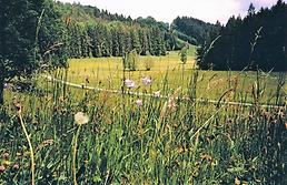 Bild88.png