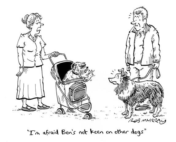 Grumpy Dogs (pt 1)