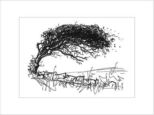Galloway Thorn I
