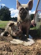 Felicia and Piggie Smalls