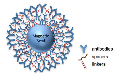 Magnetic Bead imagery.jpg