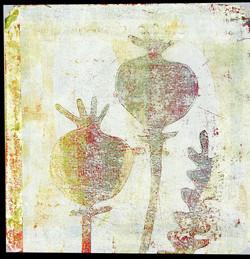 Poppies No. 5