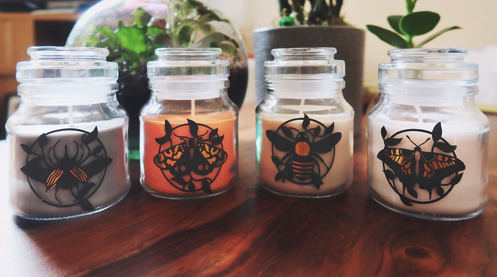 Insect Jar Candle   Moth to a Flame