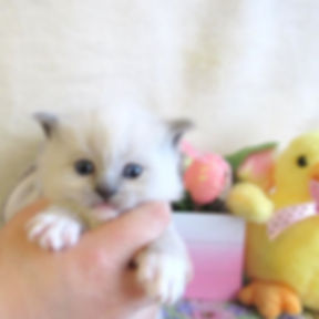 kitten 4 lp.jpg