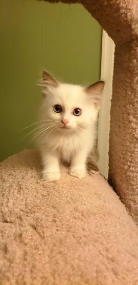 Kitten 1_5 (1).jpg