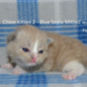 Kitten2 female.jpg