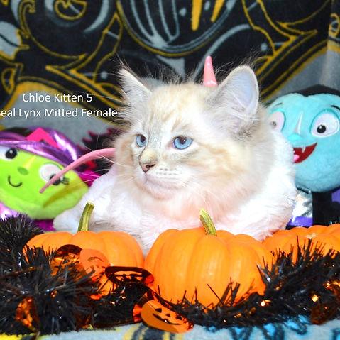 Kitten5web.jpg