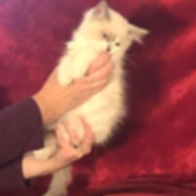 luna kitten 1 lsp.jpg
