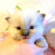 kitten  7 lp.jpg