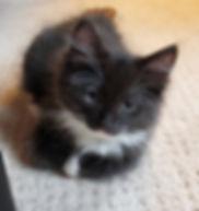 kitten cookie 2 male.jpg
