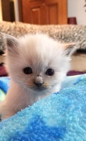 kitten 2   6  LP.jpg