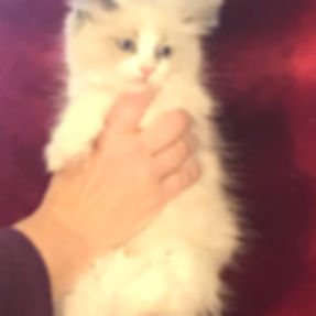 luna kitten 3.jpg