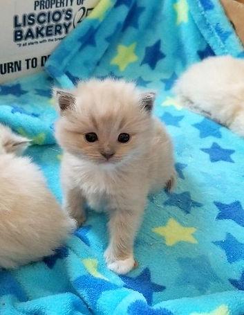 kitten 3    2.jpg