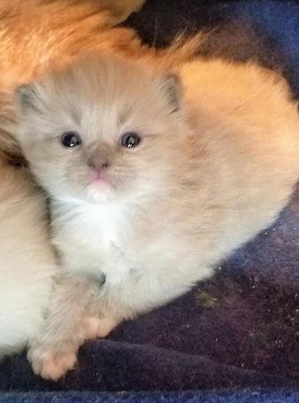 kitten 3.jfif