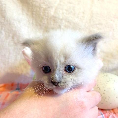 kitten 2   lp.jpg