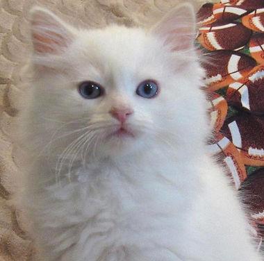 kitten 2.jpg