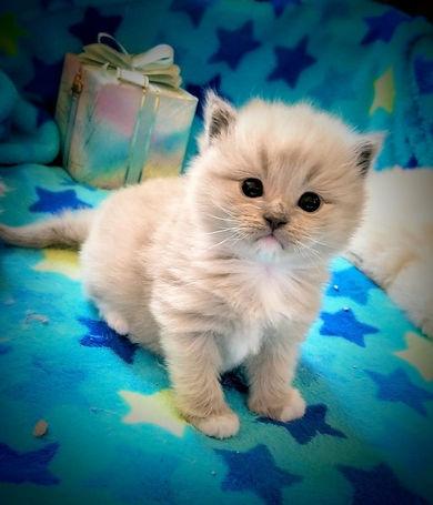 kitten 3   5.jpg
