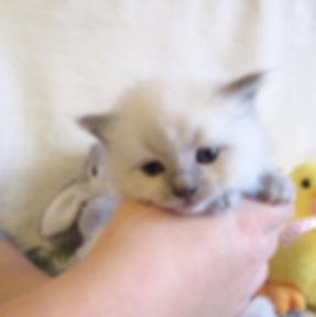 kitten 3 lp.jpg