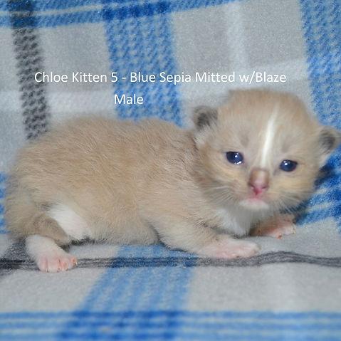 Kitten5.jpg