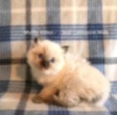 Kitten2a.jpg