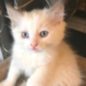 precious p kitten 3.jpg