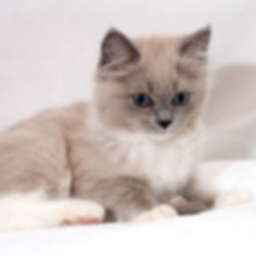 kitten 5 vayda.jpg