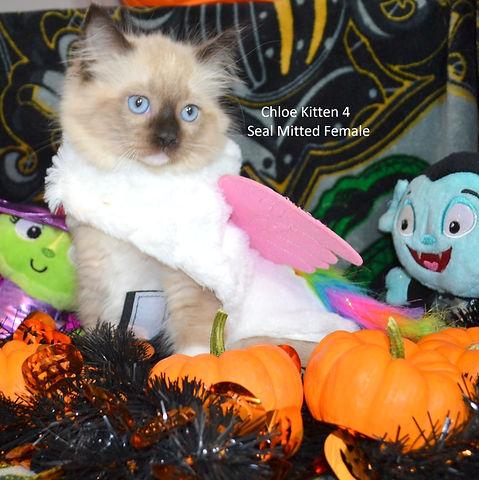 Kitten4web.jpg