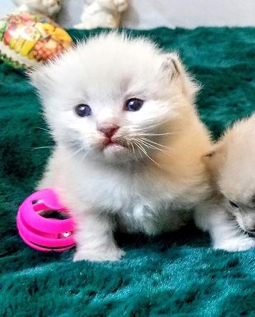 kitten 1  march 22 2020.jpg