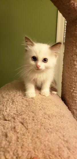 Kitten 1_4.jpg